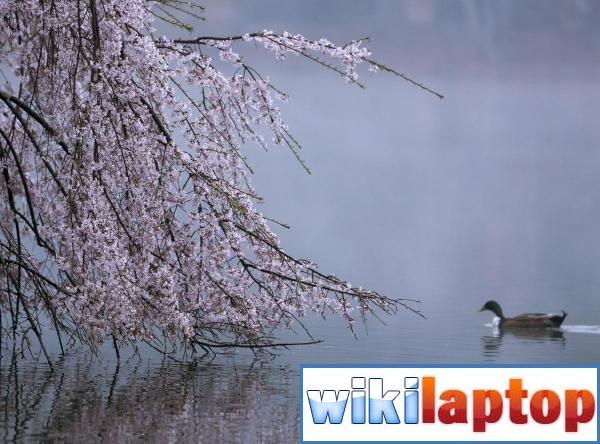 Ảnh về mùa xuân tươi đẹp trên khắp thế giới 1
